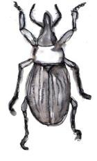 ortoptero1