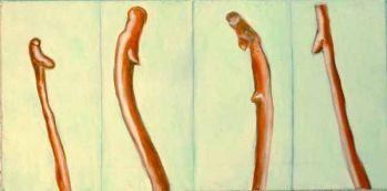 spermatozoi-1