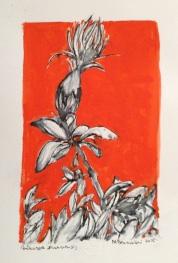 centaurea-scannensis-2015-tecnica-mista-su-carta